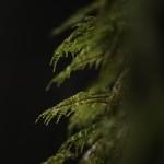 Moist Moss