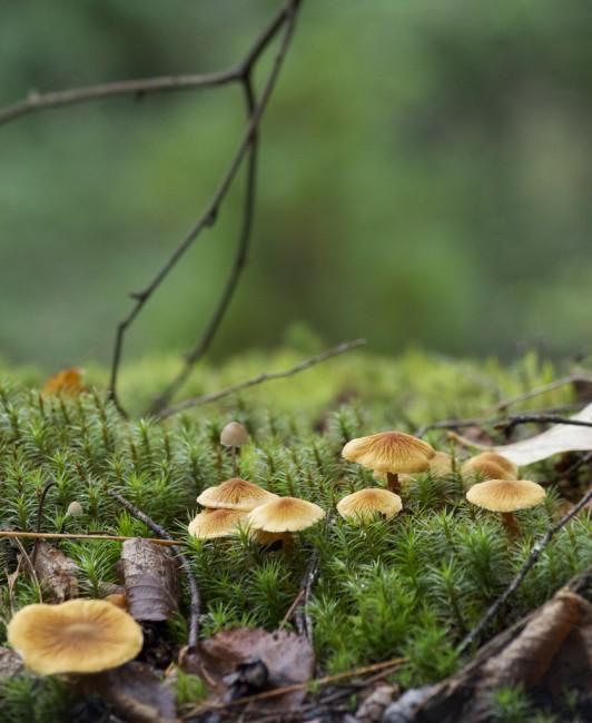 Petgill Mushrooms