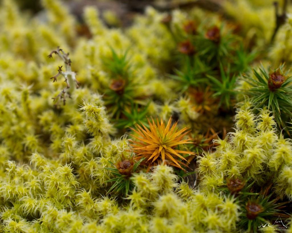 Fascinating moss world
