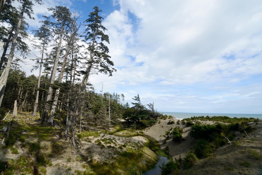 Hidden water sources behind the shore